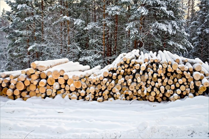 timber-in-winter-forest-stock-photo-3038761